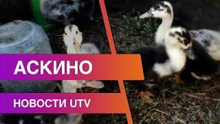 Новости Аскинского района от 17.11.2020