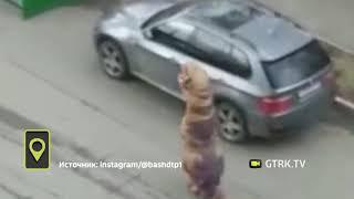 В Уфе сняли на видео тираннозавра, выбрасывающего мусор