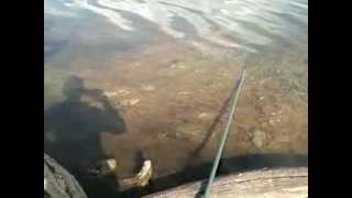прикол.рыбалка в Башкирии