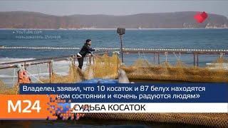 """""""Москва и мир"""": фестиваль """"Рыбная неделя"""" и расследование аварии - Москва 24"""