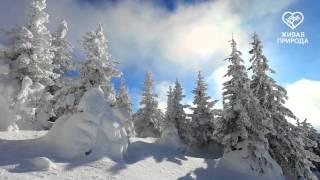 Гора Большой Шелом. Башкирия