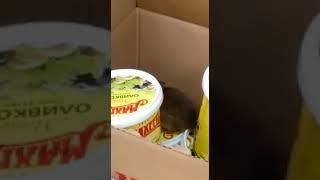 Крыса в магазине Дюртюли Монетка