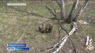 Медведица с медвежатами прогулялись в нацпарке «Башкирия» и в Уфе вьют гнезда десятки цапель