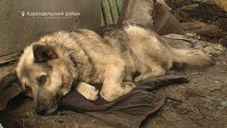 В Башкирии сельчане петардами отбиваются от волков