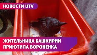 UTV. Жительница Башкирии приютила найденного в лесу воронёнка. У птицы симптомы коронавируса