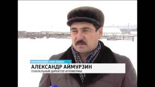 Фермеры Башкирии с помощью специальной добавки увеличивают надои молока