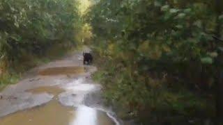 Медведь [Подслушано Онега]