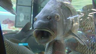 В Башкортостане не хватает местной рыбы
