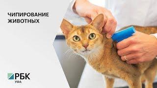 Депутаты Госсобрания РБ предлагают ввести идентификацию животных по всей стране