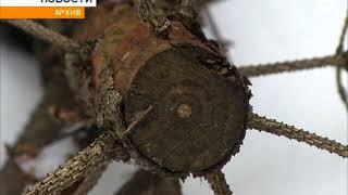 """""""Чёрный лесоруб"""" из Бирска заплатил 741 тыс. рублей за незаконную рубку деревьев"""