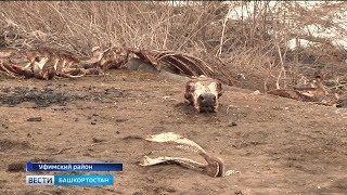 Природоохранная прокуратура республики взяла на контроль ситуацию со свалкой из костей в Миловке