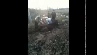 В Иглино посередине дороги в грязи застряла лошадь