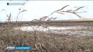 В Башкортостане из-за гибели озимых могут объявить режим ЧС