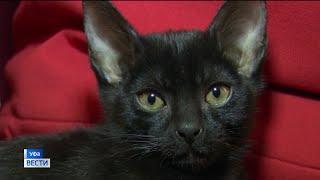 Идеальный домашний питомец: в Уфе выводят свою породу котов