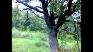 Прогулка в лес на гору.  Стерлитамак. Башкирия