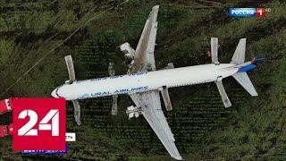 Колония пернатых: могли ли свалки вокруг аэропорта Жуковский привлечь птиц-убийц - Россия 24