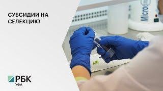 В РБ компенсирует до 20% затрат инвесторам на создание селекционно-генетических центров