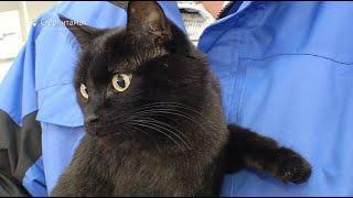 В Башкирии первый в России карманный компьютер ветеринара помог найти дом потерявшегося кота
