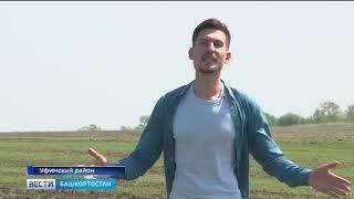 Шведская муха могла стать причиной гибели урожая озимых в Башкирии