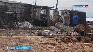 В Башкирии от удара молнии сгорела ферма с животными внутри– видео