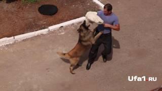 Собачье дело: найти и обезвредить