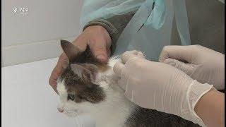 В России чипирование домашних животных может стать обязательным