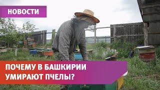 В Башкирии массово гибнут пчелы. Подробности в специальном репортаже