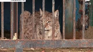 Передвижной зоопарк, остановившийся в Бирске, проверяет прокуратура
