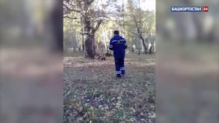 «Эх, и покормить нечем!»: Башкирии очевидцы сняли на видео разгуливающего возле дороги медведя