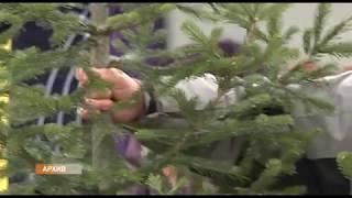 Наказание за незаконную вырубку елок