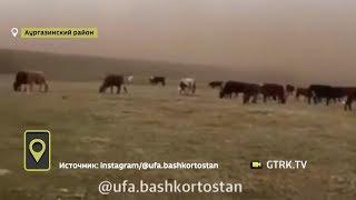«Словно фильм про апокалипсис»: на один из районов Башкирии обрушилась песчаная буря