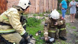 Томские пожарные реанимировали спасенного из горящей квартиры котика