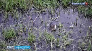 Поющих жаб во время брачных игр сняли на видео в Башкирии