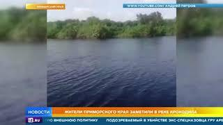 В одной из рек в Приморье поселился крокодил