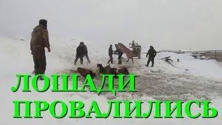 В Башкирии из воды вытащили табун лошадей
