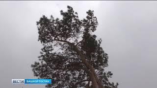 Сильный ветер и снег: в Башкирии действует штормовое предупреждение