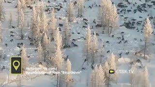 «У волков гон и они выходят на свет»- в нацпарке «Башкирия» рассказали о надвигающейся стае волков