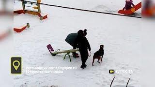 Житель Башкирии выгуливает стаффорда на детской площадке и без намордника: видео