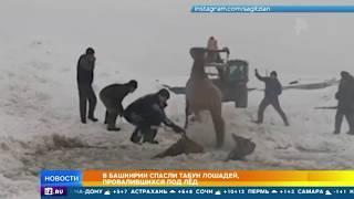 В Башкирии спасли табун лошадей, провалившийся под лед