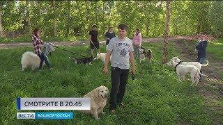 Жители Уфы жалуются на отсутствие площадок для выгула собак