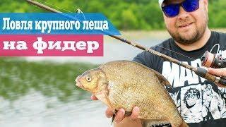 Рыбалка на крупного леща летом