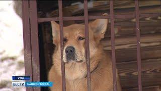 Новый закон официально запрещает в Башкирии деятельность догхантеров: репортаж «Вестей»