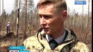 Хвойные леса восстанавливают в Братске