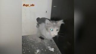 Спасение застрявшего котенка