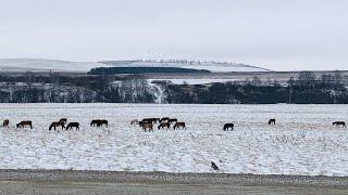 Поездка на Весте по УРАЛУ (Зима), дорога до Янган-Тау (Башкирия).