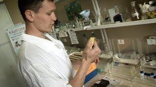 Учёный изобрёл витамины для пчёл