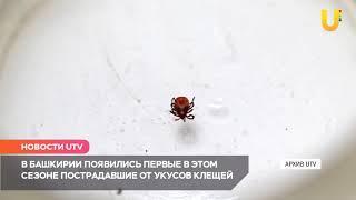 Новости UTV. Первые укусы клещей