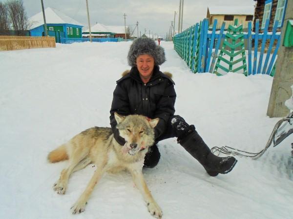 Самый большой волк в Башкирии